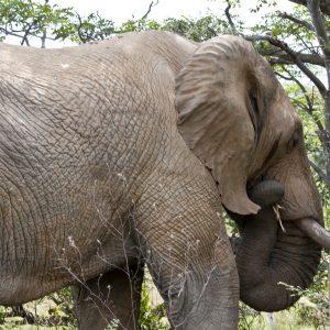 Jamila Lodge Elephant
