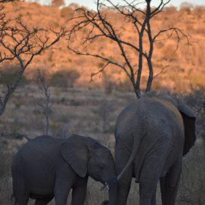 Jamila Lodge Baby Elephants