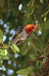 Jamila Lodge Beautiful Birdlife