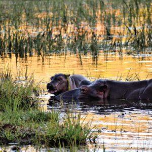 Jamila Lodge Hippos