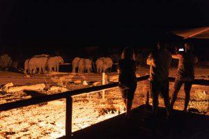 Jamila Lodge Elephants by the waterhole at night