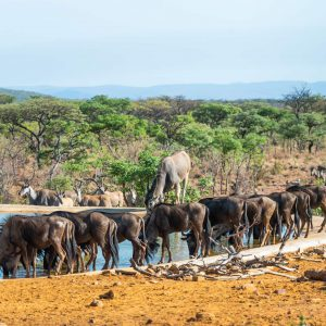 Jamila Lodge Game at the water hole