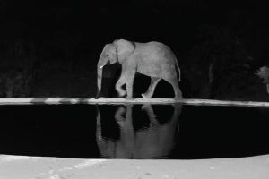Jamila Lodge Elephants by the waterhole at night