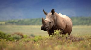 Jamila Lodge Welgevonden Rhino BG